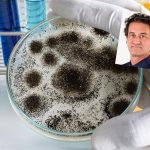 Is Hidden Mold The Hidden Cause Of Your Health Problems with Dr Mark Filidei on the Brain Warriors Way Podcast with Dr Daniel Amen And Tana Amen BSN RN